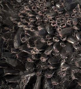 Catfish RAS aquaculture Kreislaufanlage REX-M УЗВ сом