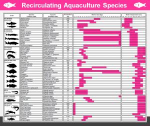 REX-M Recirculating Aquaculture Species catfish sturgeon pikeperch tilapia prawn crayfish carp trout salmon