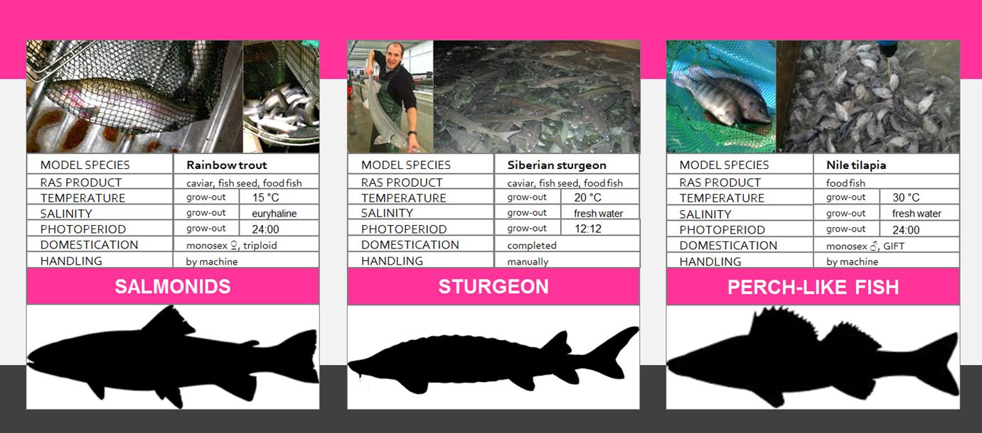 REX-M Recirculating Aquaculture Systems RAS Aquaculture pisciculture sturgeon caviar Atlantic salmon Pacific salmon rainbow trout perch-like tilapia pikeperch barramundi HSB