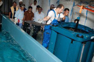 Fischtransport Abu Dhabi - Entladung