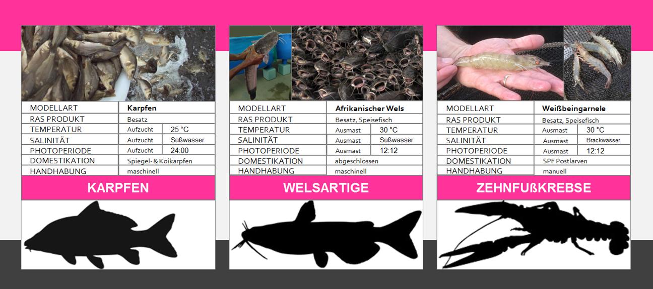 REX-M Kreislaufanlagen RAS Aquakultur Fischzucht Karpfen Wels Garnele